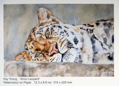 Amur leopard by Kay Young