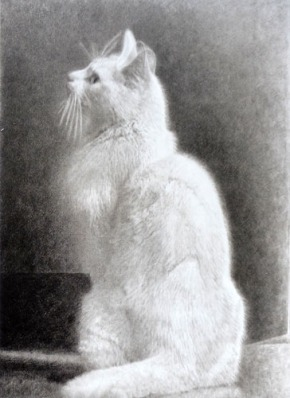 SOFA-Dominic-OCallaghan-ghost-cat