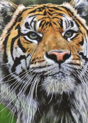 Sumatran Stare by Kev Mullins