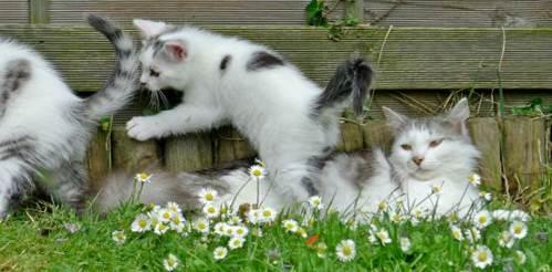Laila lying among daisies