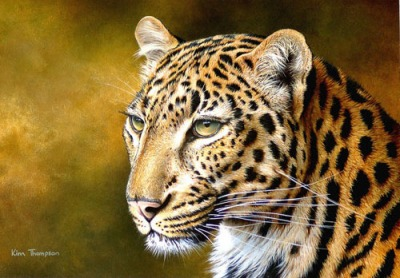 Kim Thompson Leopard Portrait