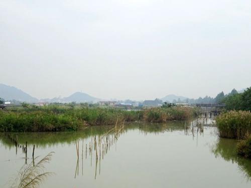 wetland reserve zhuhai