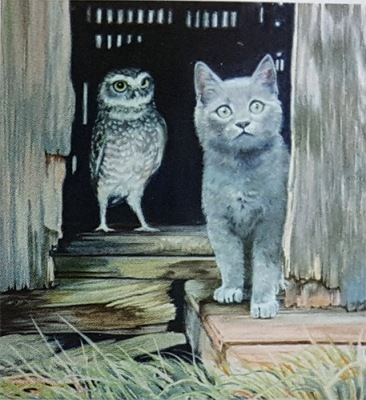 The Owl And The Pussycat by Jackie Cox