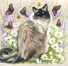 Time Of Butterflies