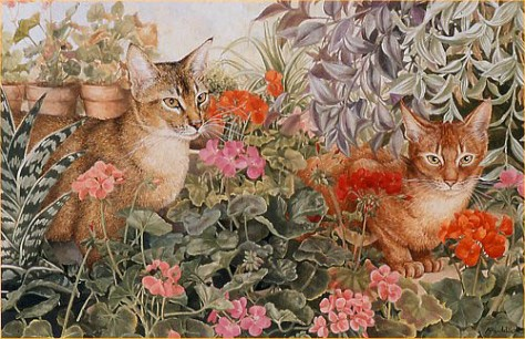 Abyssinians and Geraniums