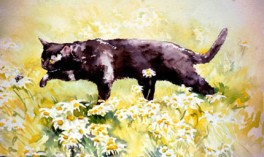 Black Cat and Daisies