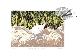 Alex Johnson - White Cat on the Rocks