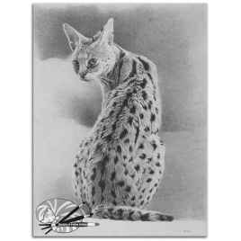 Dominic_O_Callaghan_The_title_Sitting_Serval_Medium_Graphite_on_board_Size_27cm_H_x_19cm_W_750 (2)